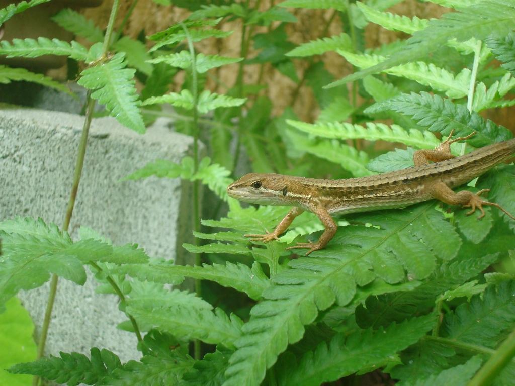 grass-lizard-11.jpg