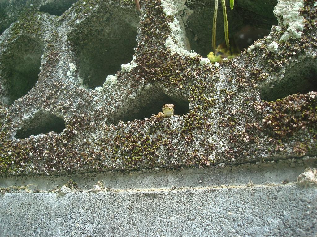 grass-lizard-12.jpg