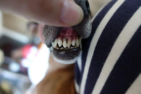 犬の歯医者さん5