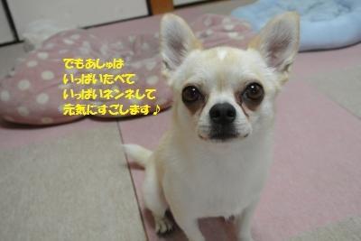 DSC_6035_convert_20170803113904.jpg