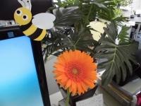 献花式のガーベラ