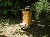 早速、スズメバチ捕殺器設置しました