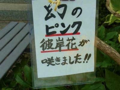 syukusyo-RIMG1147_20170915203653680.jpg
