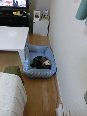 子ネコのお世話とマイロのクッションが 035