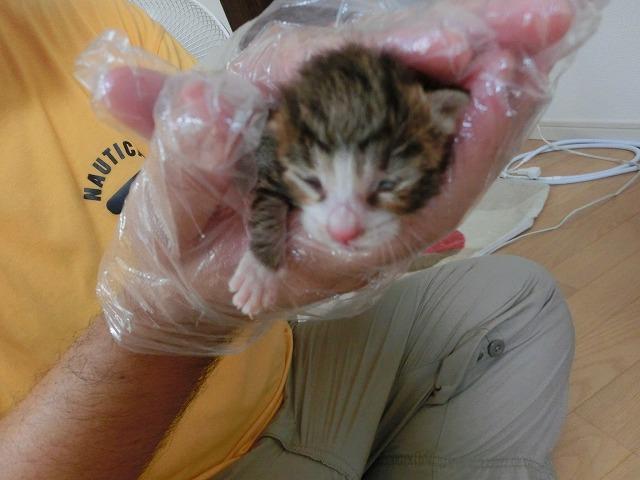 子ネコのお世話とマイロのクッションが 029