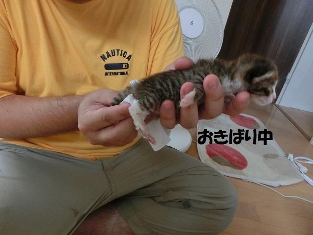 子ネコのお世話とマイロのクッションが 023