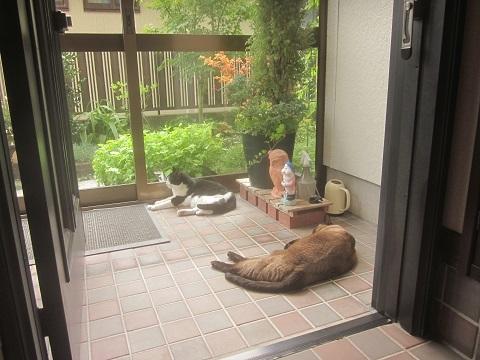 ネコ 玄関