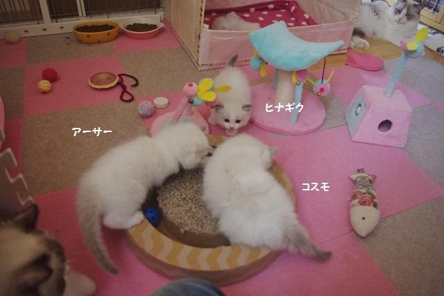 C20170831IMGP0162.jpg