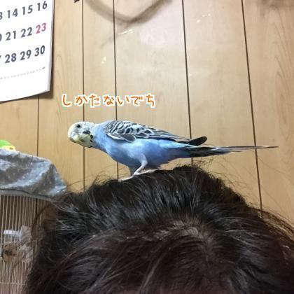 二太2017/09/11-7