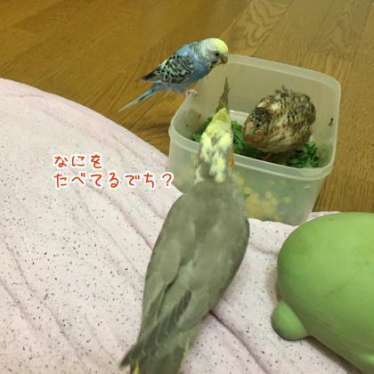 二太2017/09/12-6