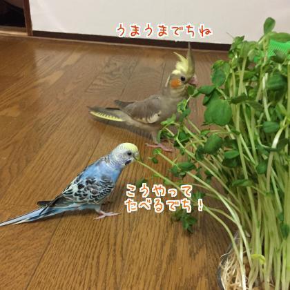 二太2017/09/16-3