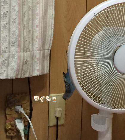 二太2017/07/21-5
