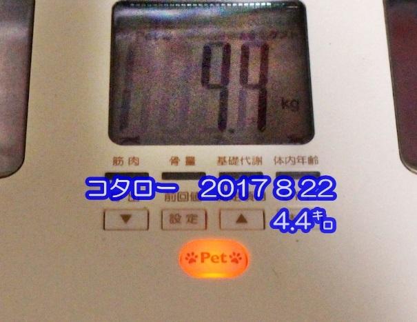 2017 08 22_4990-1