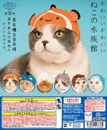 cat_aqua_dp.jpg
