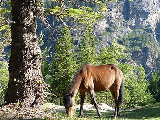 320px-Horse_on_the_mountain.jpg