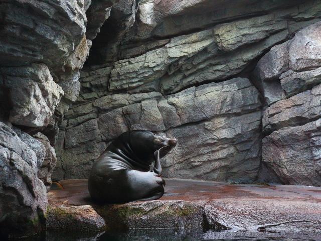 加茂水族館31