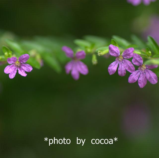 DSC_0089 2014-08-20 16-30-001