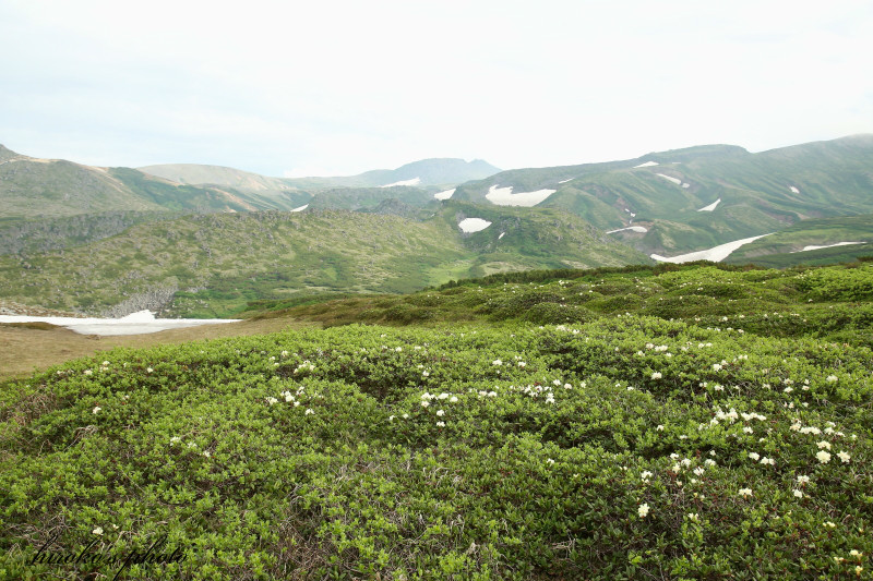 069 黒岳の高山植物0001署名入りedited