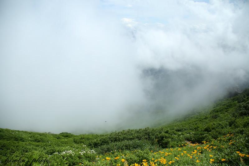 522 黒岳の高山植物0001署名入りedited