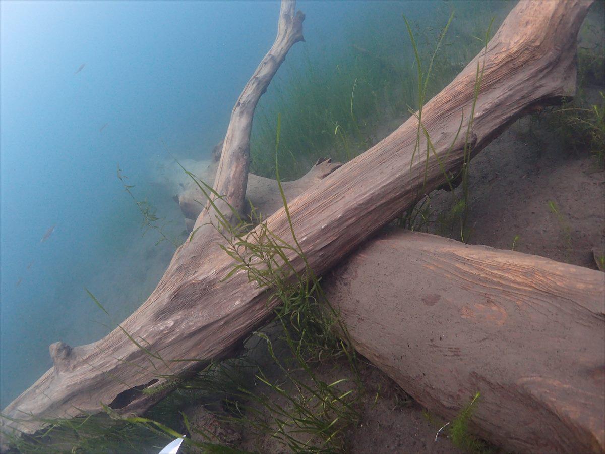 本栖湖ダイビング沈木溶岩湧水画像 (11)
