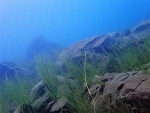 lake motosu fuji (2)