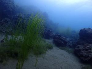 6本栖湖癒やしの風景 (2)