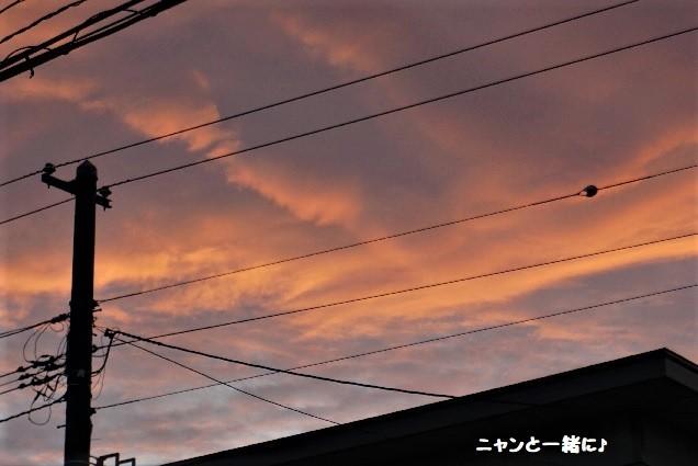 yusora825 (2)