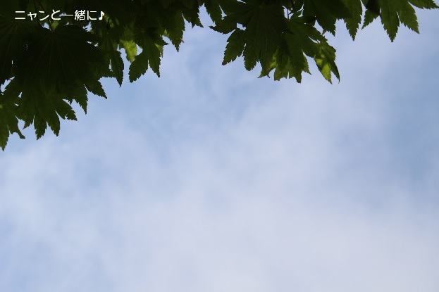 harekumori803.jpg