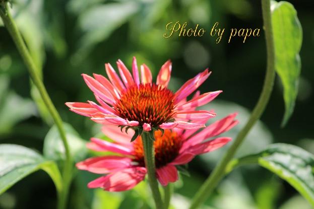 photobypapa723a.jpg