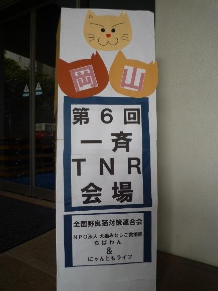 TNR3.jpg