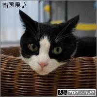 dai20170807_banner.jpg