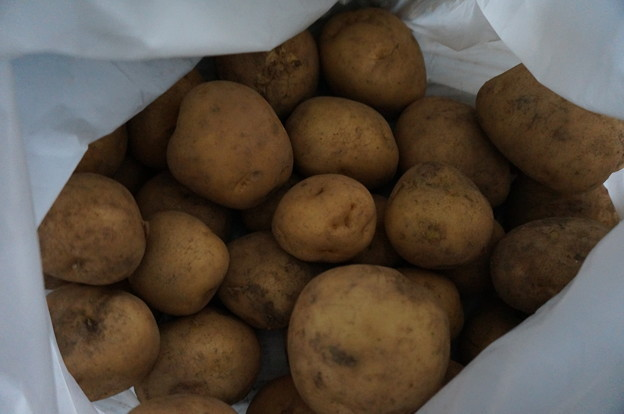 採りたてのジャガイモ