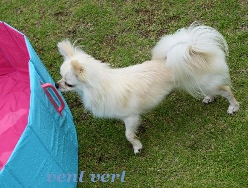 犬プール2