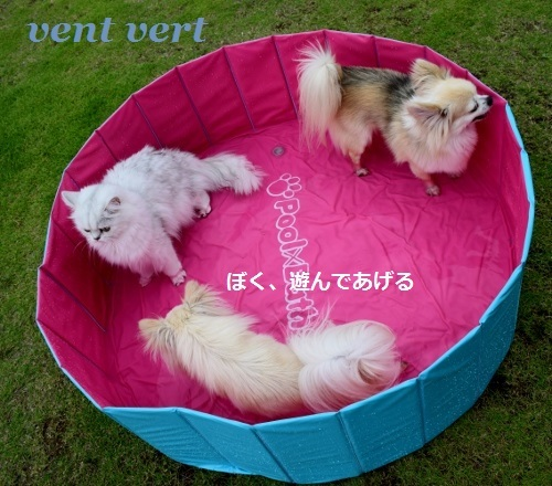 犬プール8