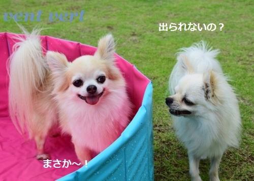 犬プール9