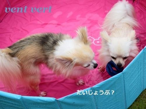 犬プール6