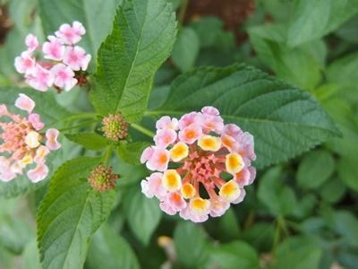 flower170813.jpg