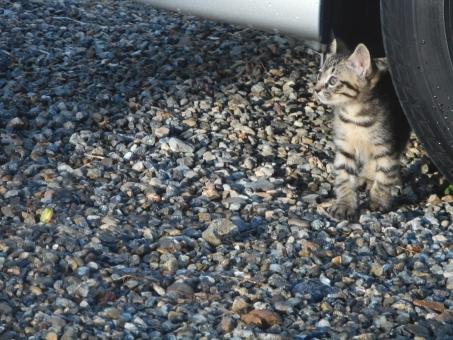 動物虐待,動物愛護,子猫