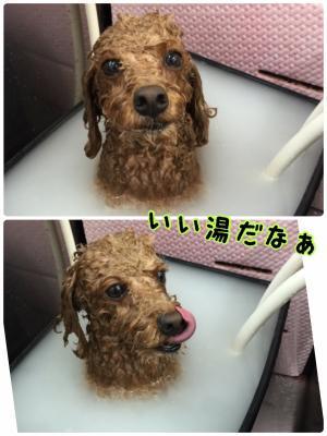 ちょ_convert_20170714212442