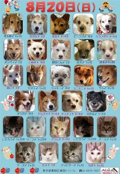 ALMA ティアハイム 8月20日 参加犬猫一覧