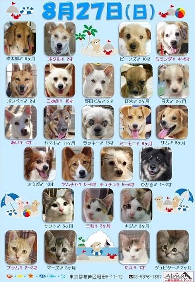 ALMA ティアハイム8月27日参加犬猫一覧 (2)