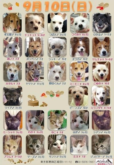 ALMA ティアハイム 9月10日 参加犬猫一覧