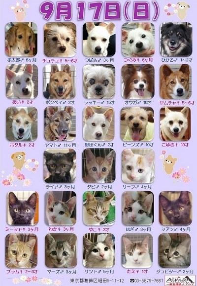 ALMA ティアハイム 9月17日 参加犬猫一覧 (002)