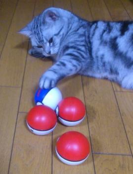 猫 モンスターボール