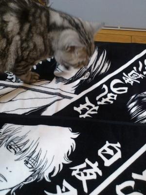 猫 大銀魂展 大阪限定タオル