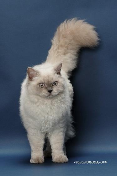 カタログ用6th Best Kitten