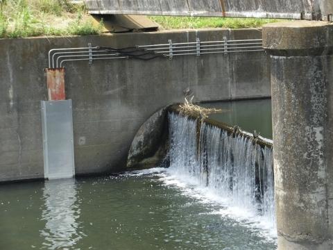 目久尻川用田橋の油圧式転倒堰