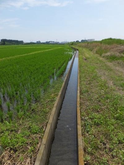 藤沢市宮原・田んぼの中の取水施設、用水路