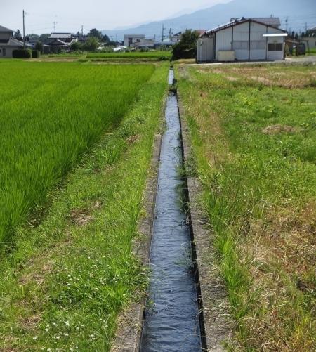 「大泉21号乙」円筒分水工から田んぼへ向かう用水路
