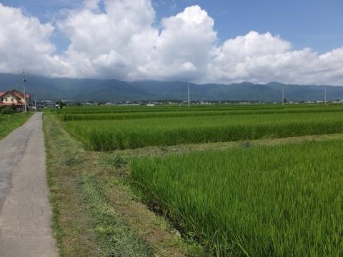 長野県南箕輪村の田んぼ